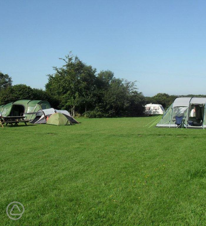 Dog Friendly Campsites In Devon