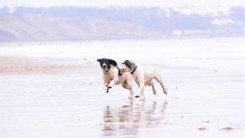 Dog Friendly B B Yorkshire Wolds