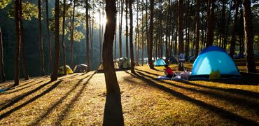 Woodland and forest campsites
