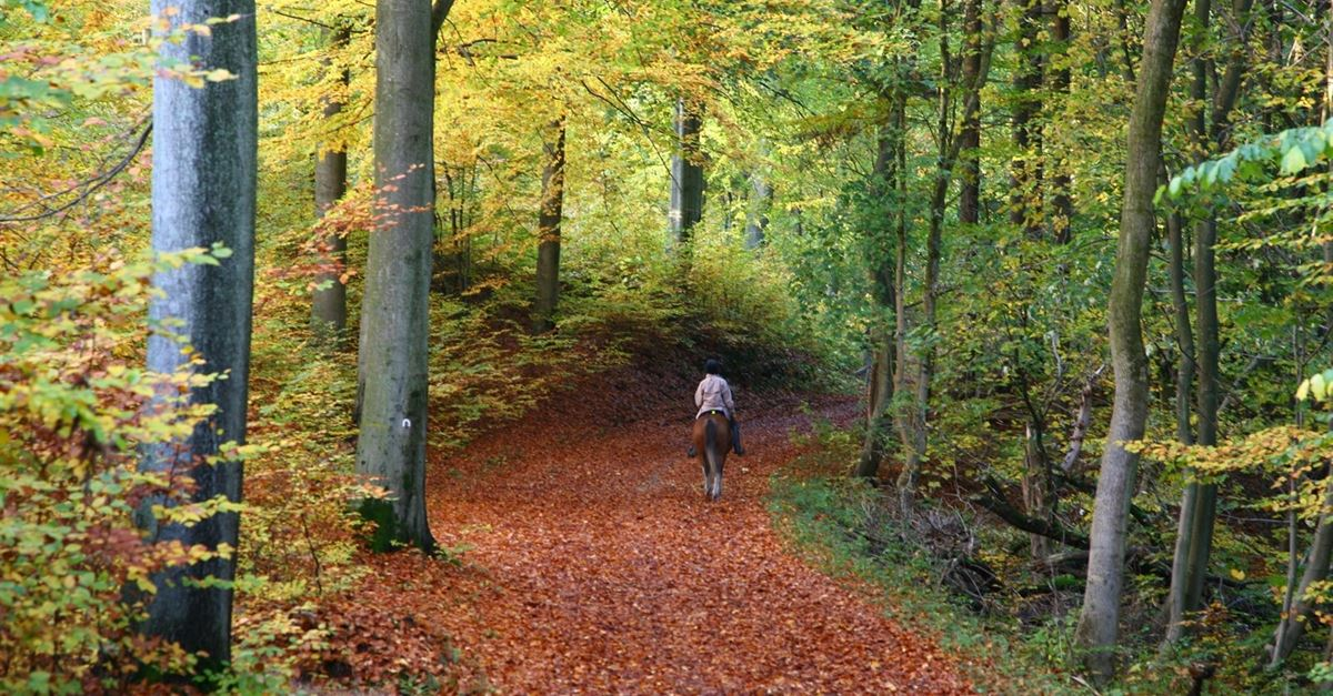 Why you should go horse riding in the new forest for Places to go horseback riding near me